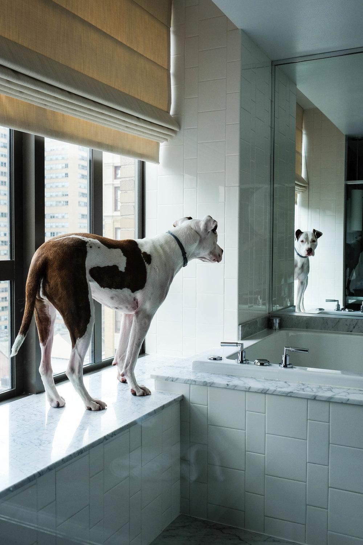 Kimpton_Hotel_Philadelphia_Dog_Friendly_Photographer_Kristen_Humbert-7668.jpg