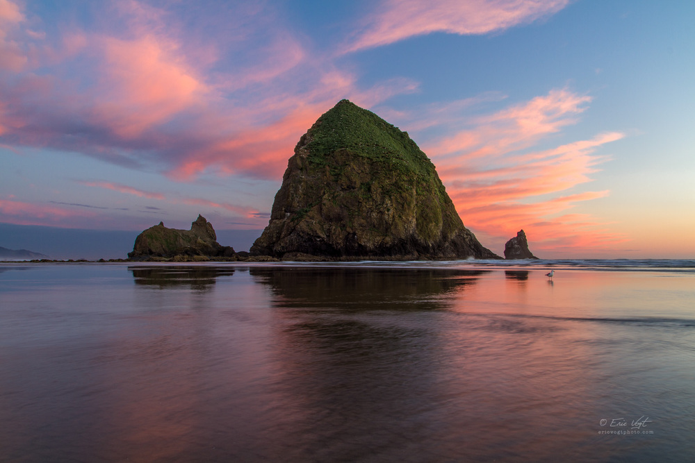 Cannon Beach, Seagull's Sunset View