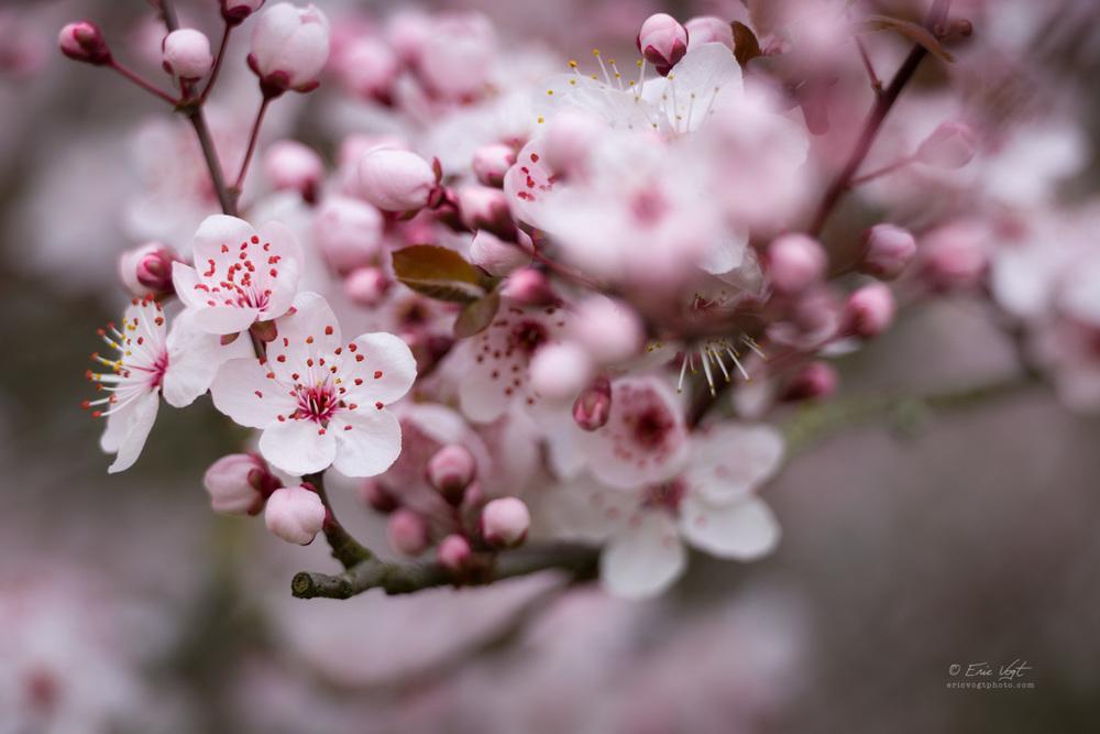 Pink Blossom Bouquet