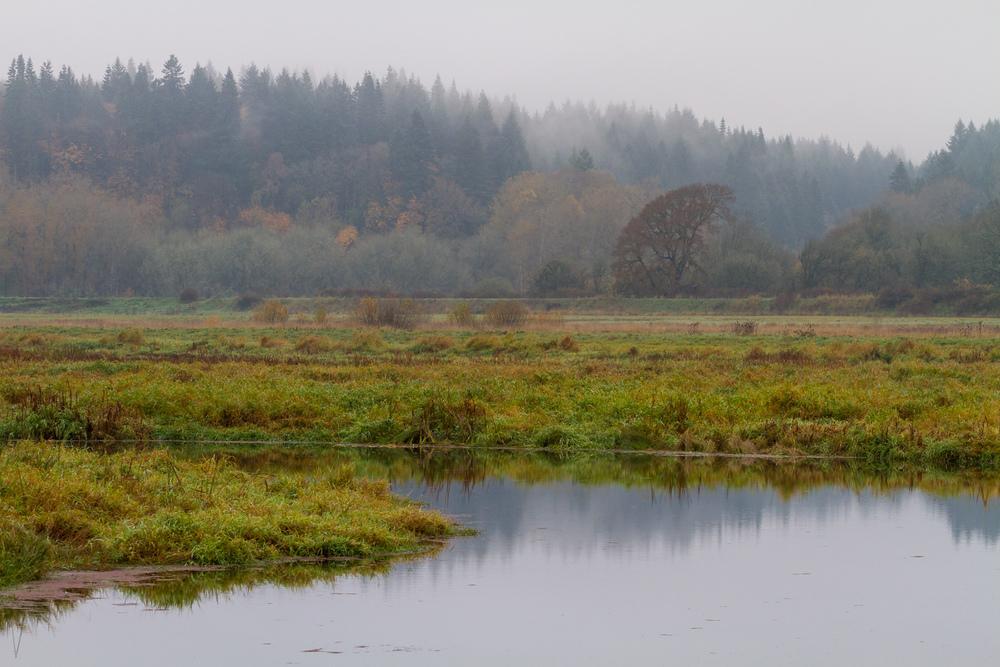 Ridgefield Autumn Fog