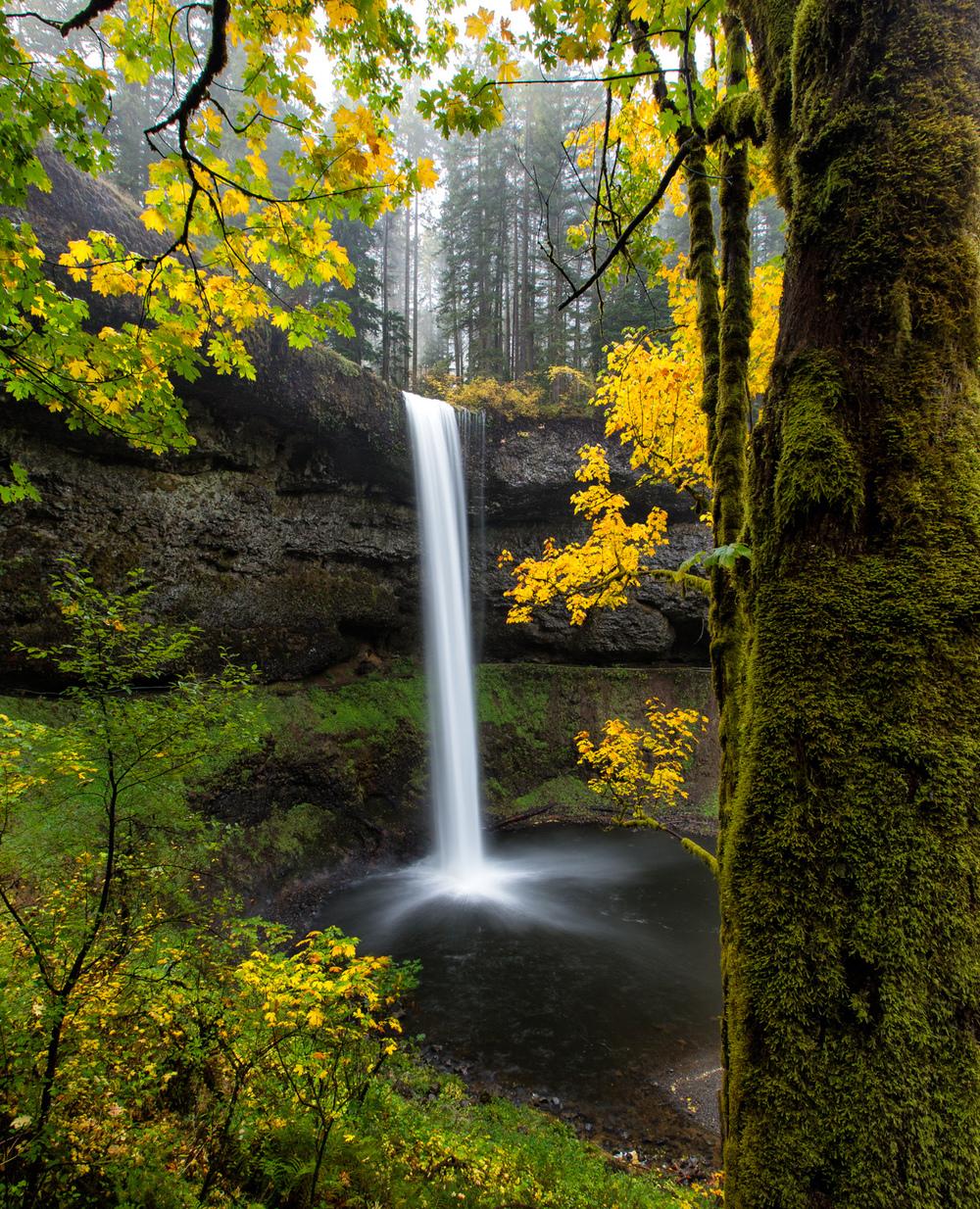 Autumn Gold at Silver Falls