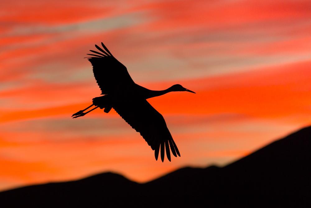 Crane Into the Sunset