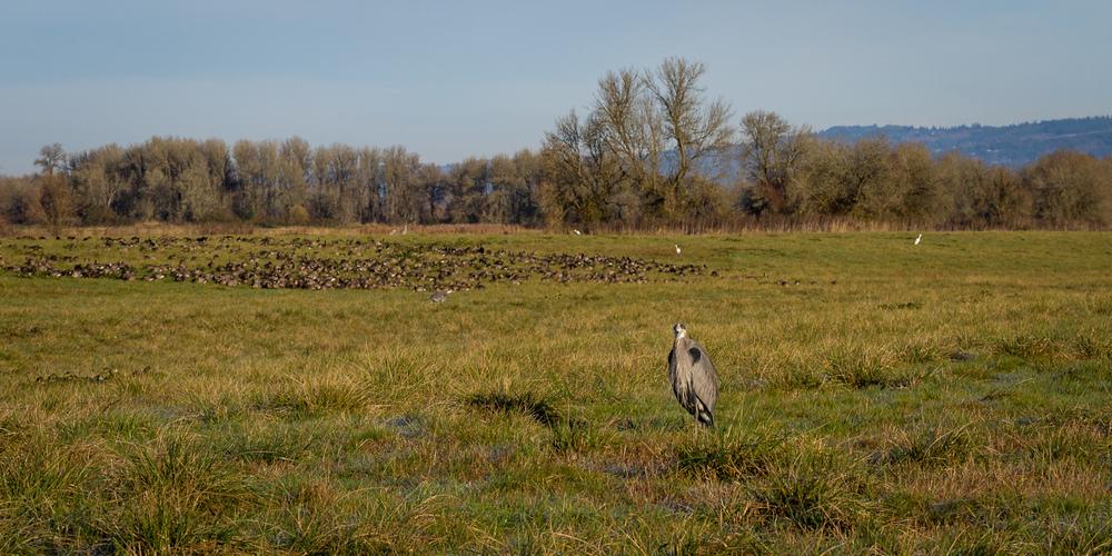 Ridgefield Birdscape