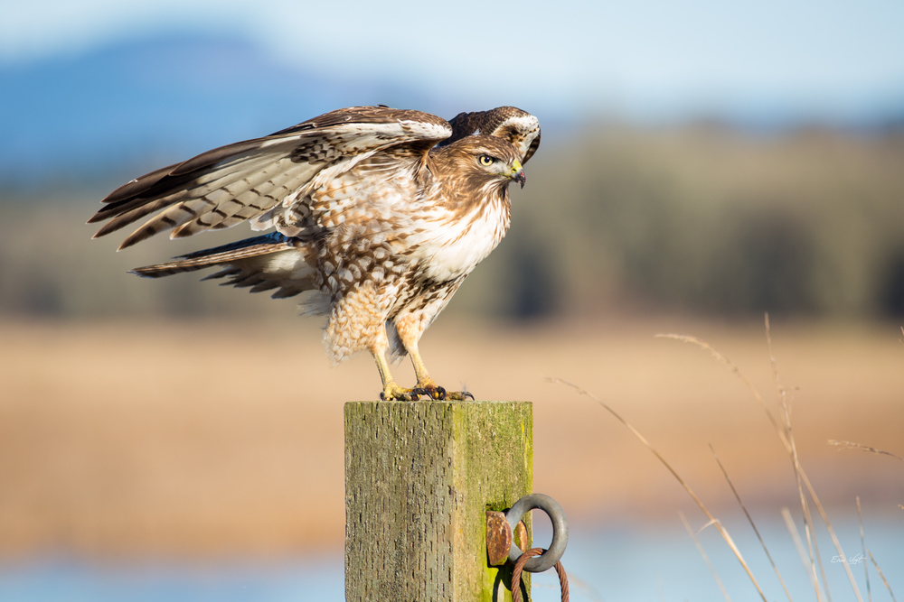 Red-Tail's Post