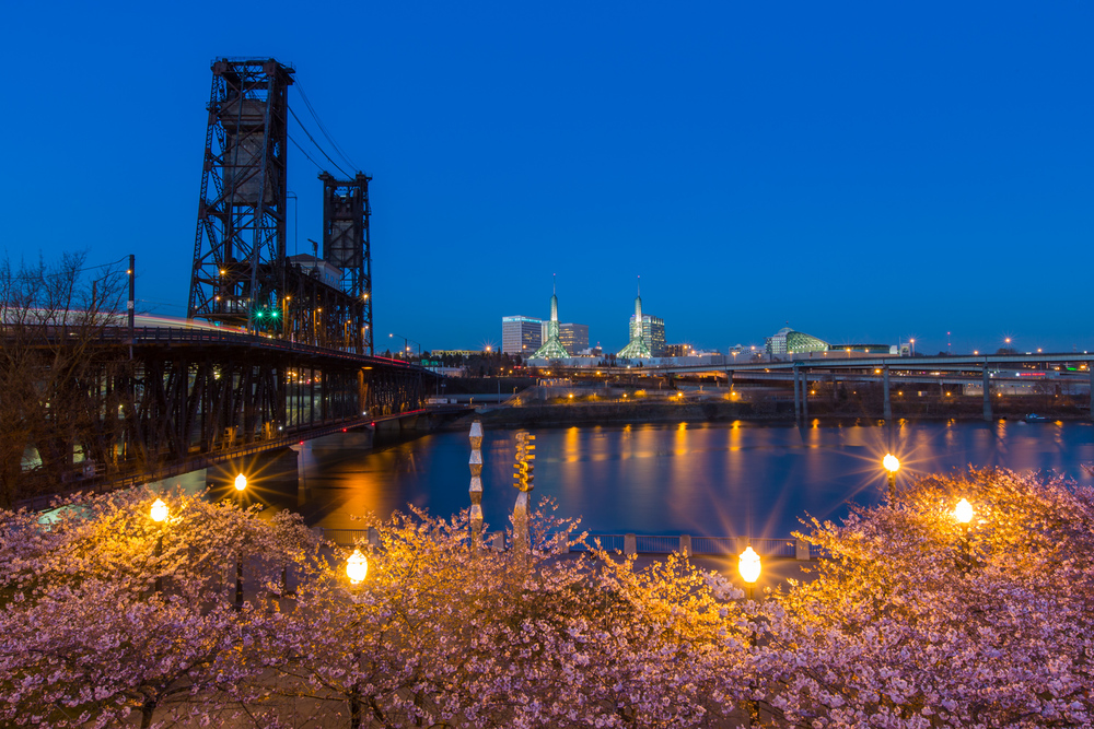 Blue Hour Blossoms