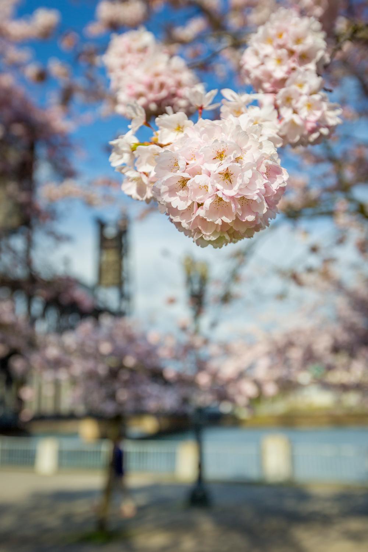 Spring Bokeh (Bouquet)
