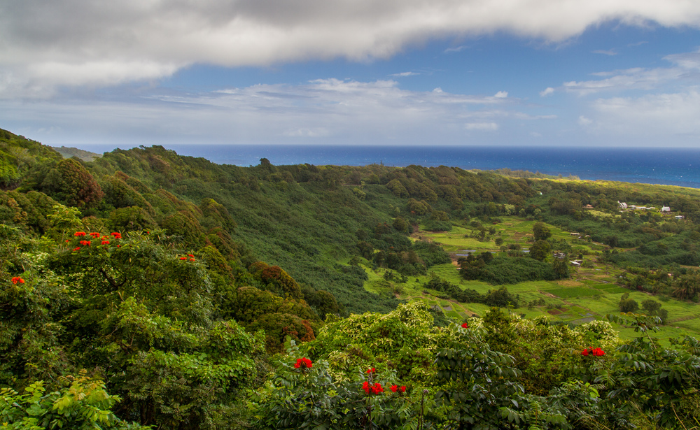 The Lush Side of Maui