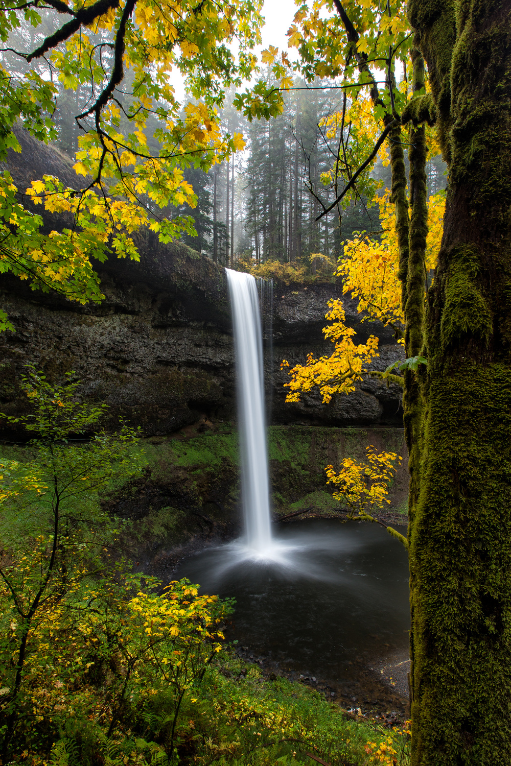 Autumn Gold at Silver Falls