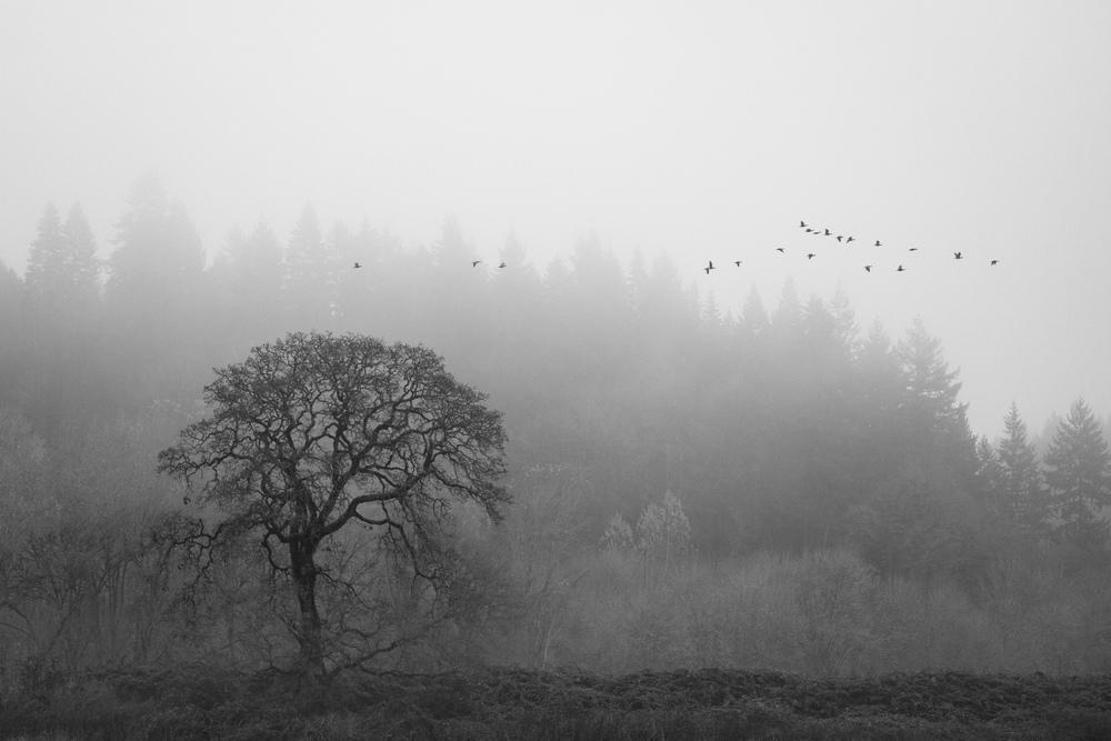 Foggy Ridgefield Flyby