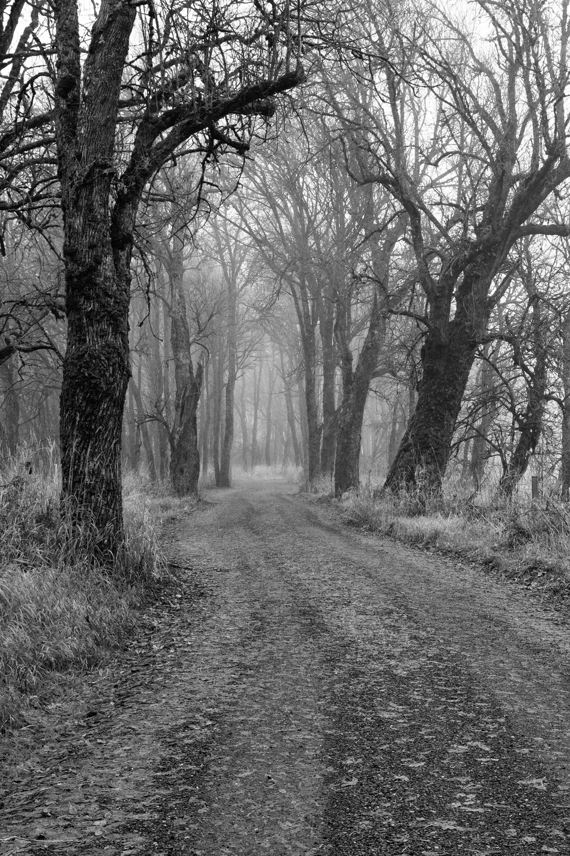 Eerie Lane