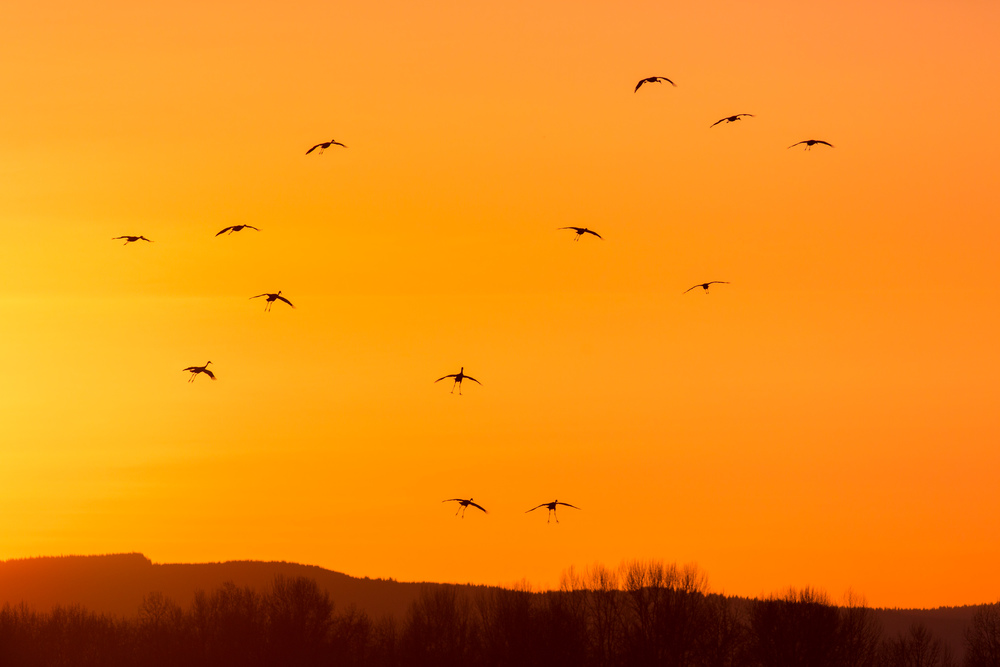 Falling Like Cranes
