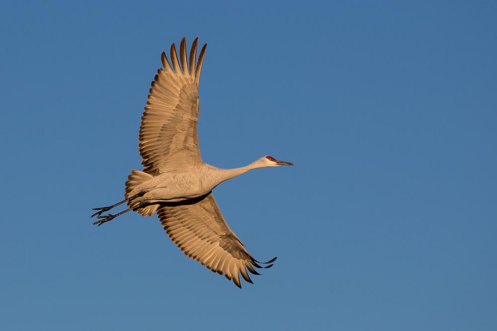 Crane on Blue