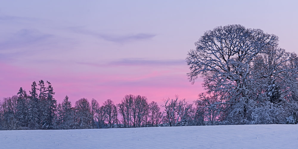Bare Trees Winter Blush