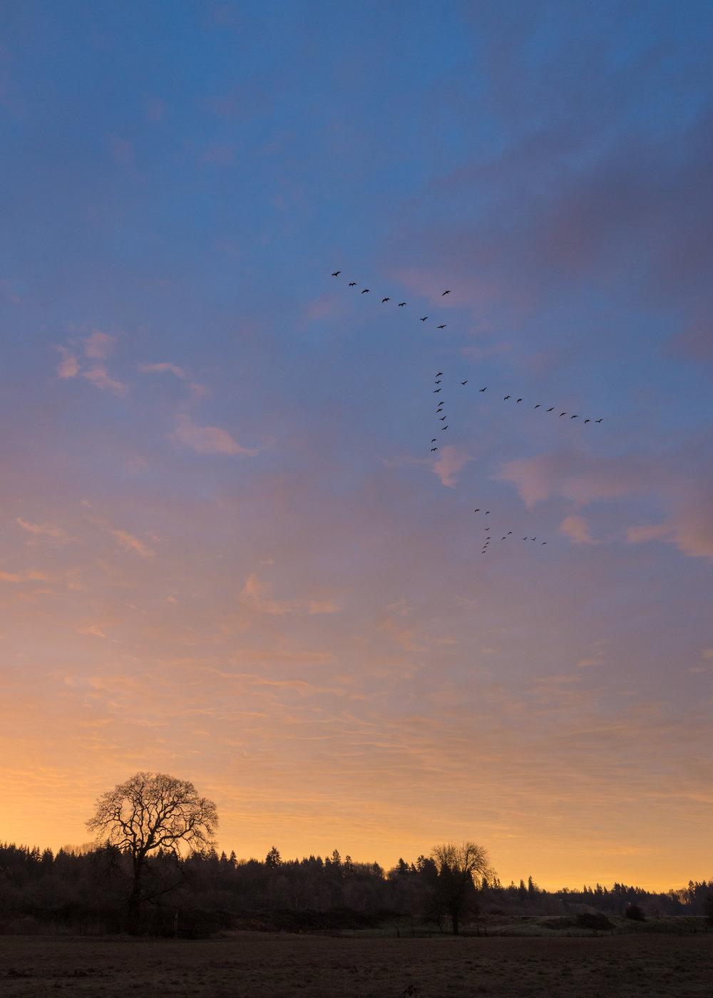Cackler's Sunrise Flight