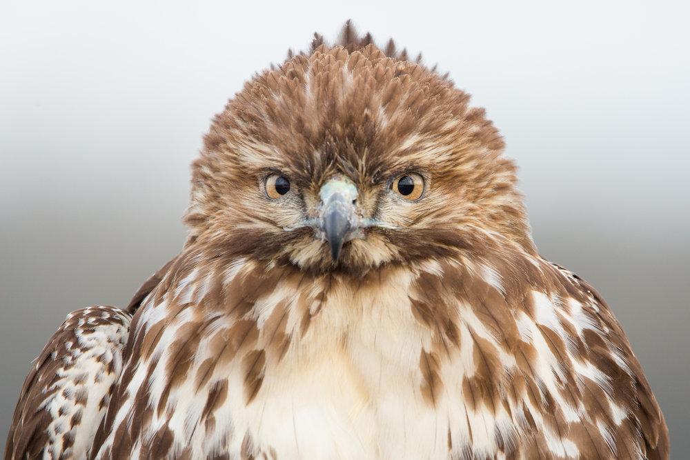 Watching You Like A Hawk