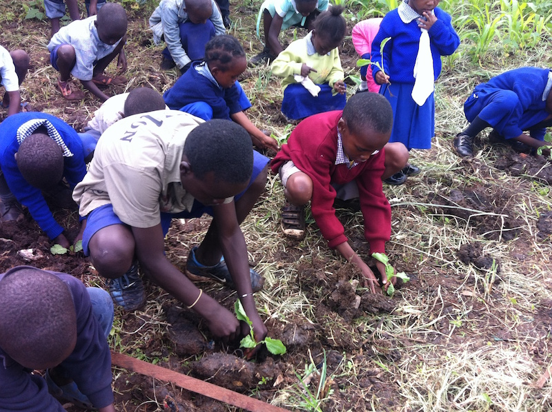 Students assisting with plantation