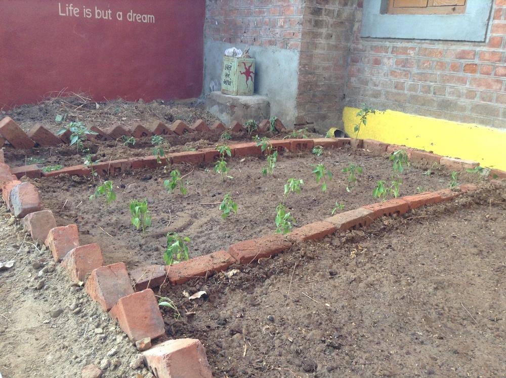 Starting plantation of vegetables.