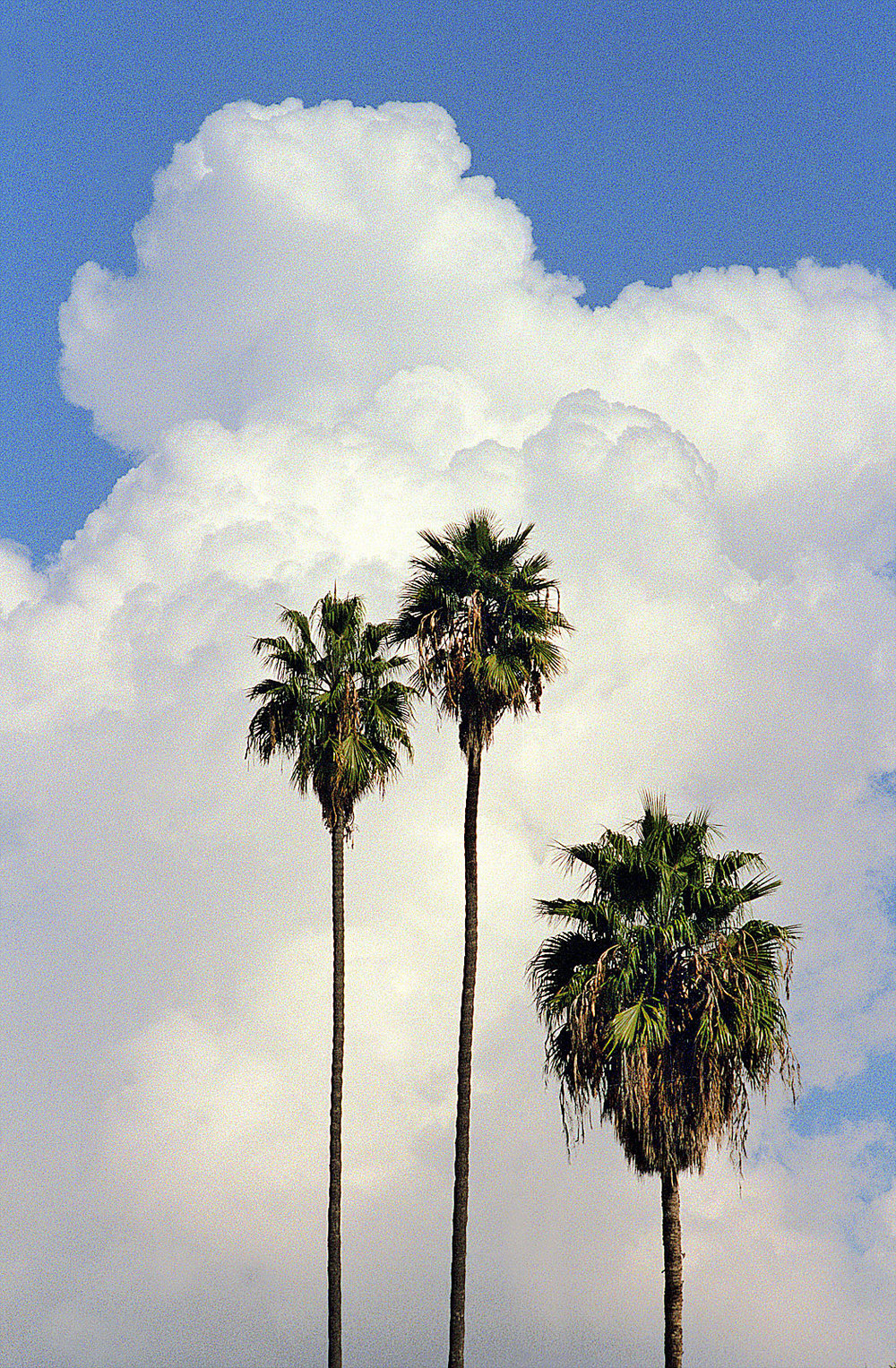 Palms & Clouds