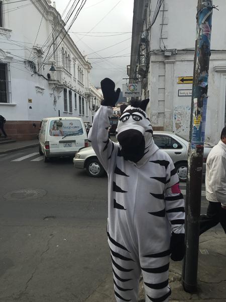 live_zebra_crossing_sucre_bolivia.jpg