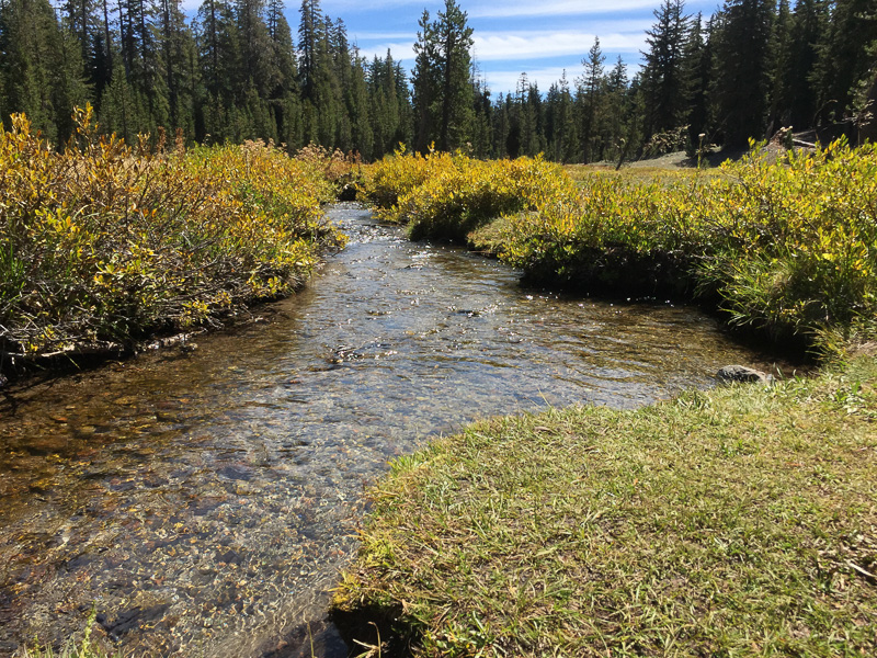 meadow_stream_yellowstone_national_park
