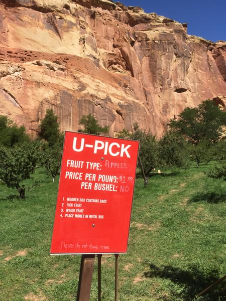 pick_fruit_capitol_reef_national_park_utah.jpg