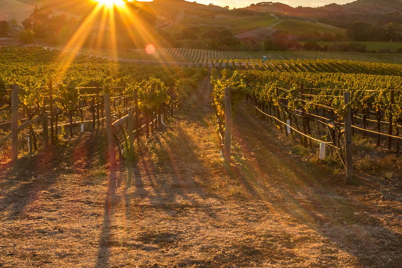 sunset_napa_valley_vineyard.jpg