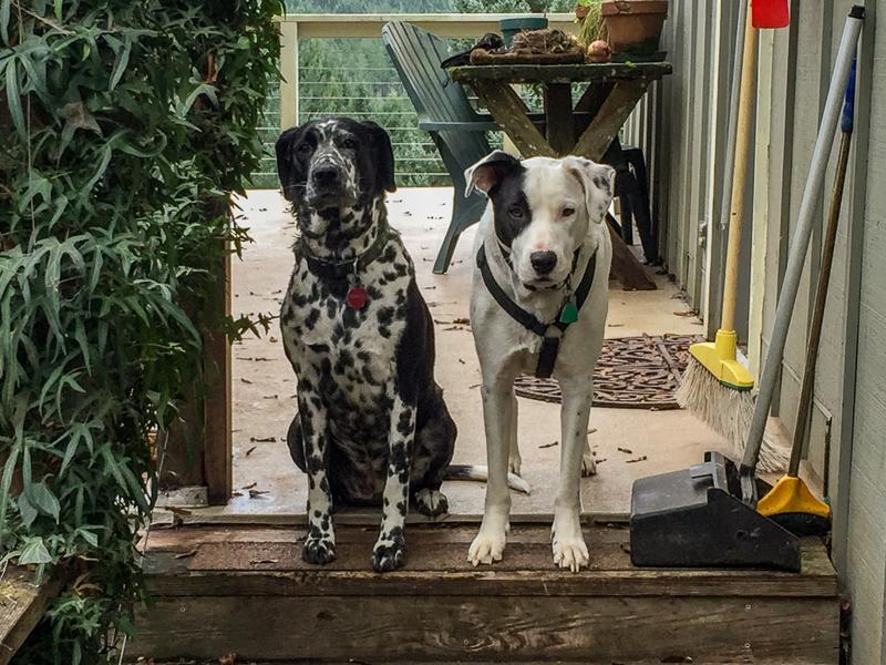 housesitting_dogs.jpg