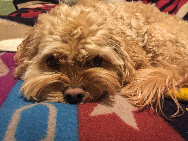 housesitting_adorable_dog.jpg