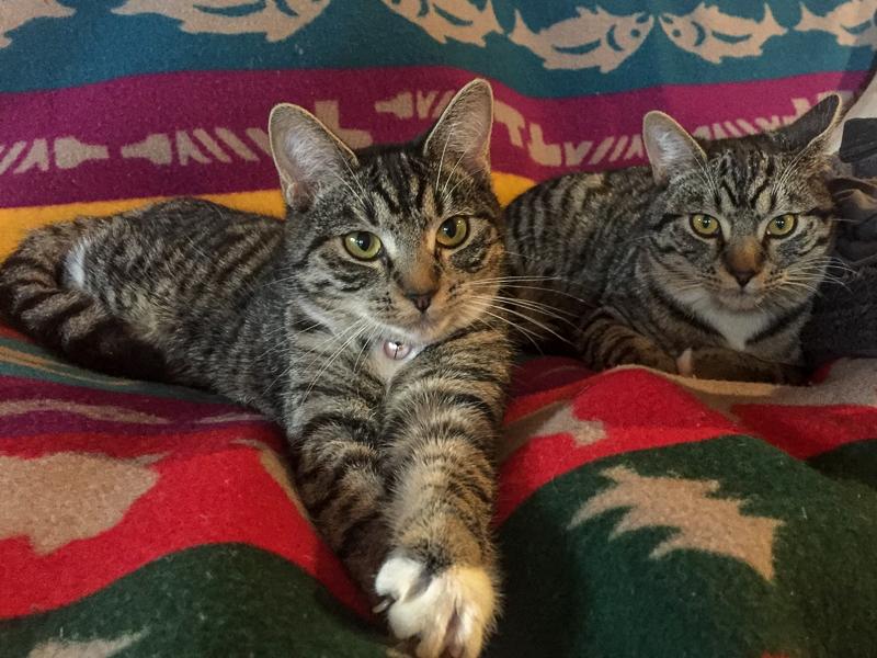 housesitting_adorable_cats.jpg