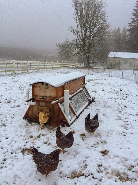 snow_chickens_up_close.jpg