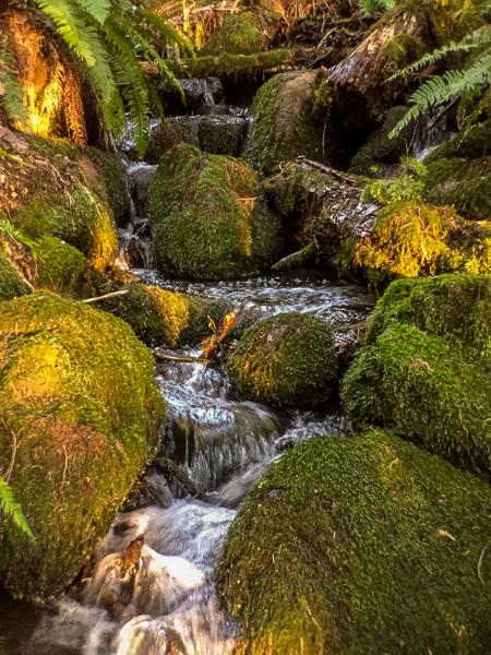 moss_covered_stream.jpg