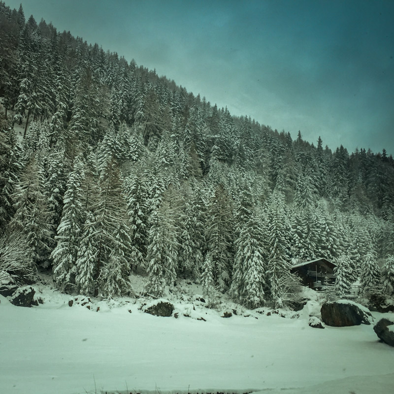 snow_covered_forest_france.jpg