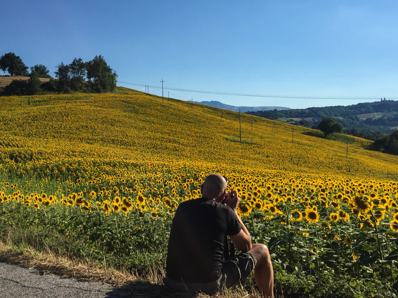 photographing_sunflowers_italy.jpg