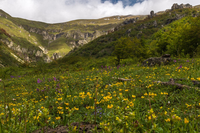 meadow_gole_dell_infernaccio_marche_italy.jpg