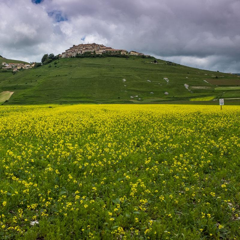 wildflowers_piano_grande_marche_italy.jpg