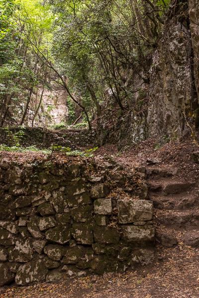 path_of_the_gods_woods.jpg