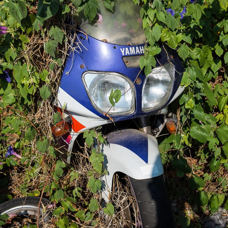 motorbike_bush.jpg