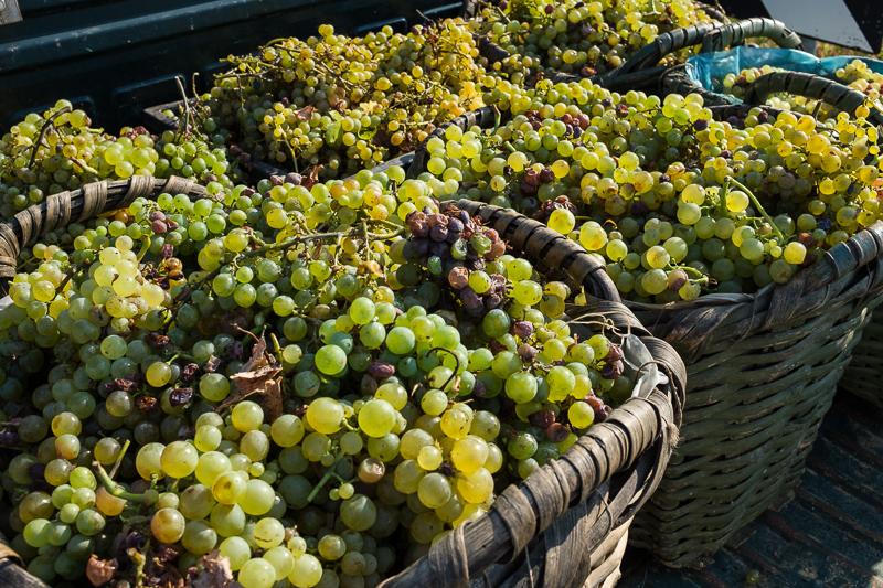 cinque_terre_grapes_baskets.jpg