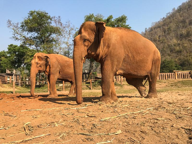 Elephant Love @ J2F