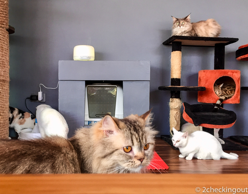 A coffee and cat lovers heaven