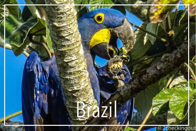 hyacinth_macaw_pantanal_brazil.jpg