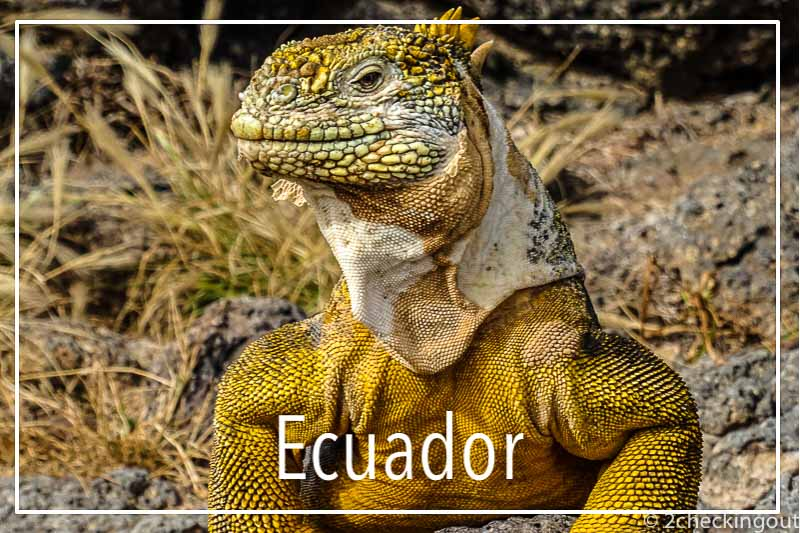 land_iguana_galapagos_islands_ecuador.jpg