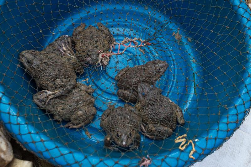 frogs_market_luang_prabang.jpg