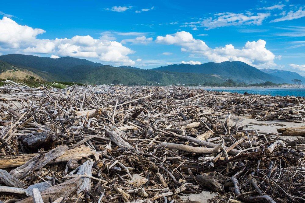 driftwood_beach.jpg