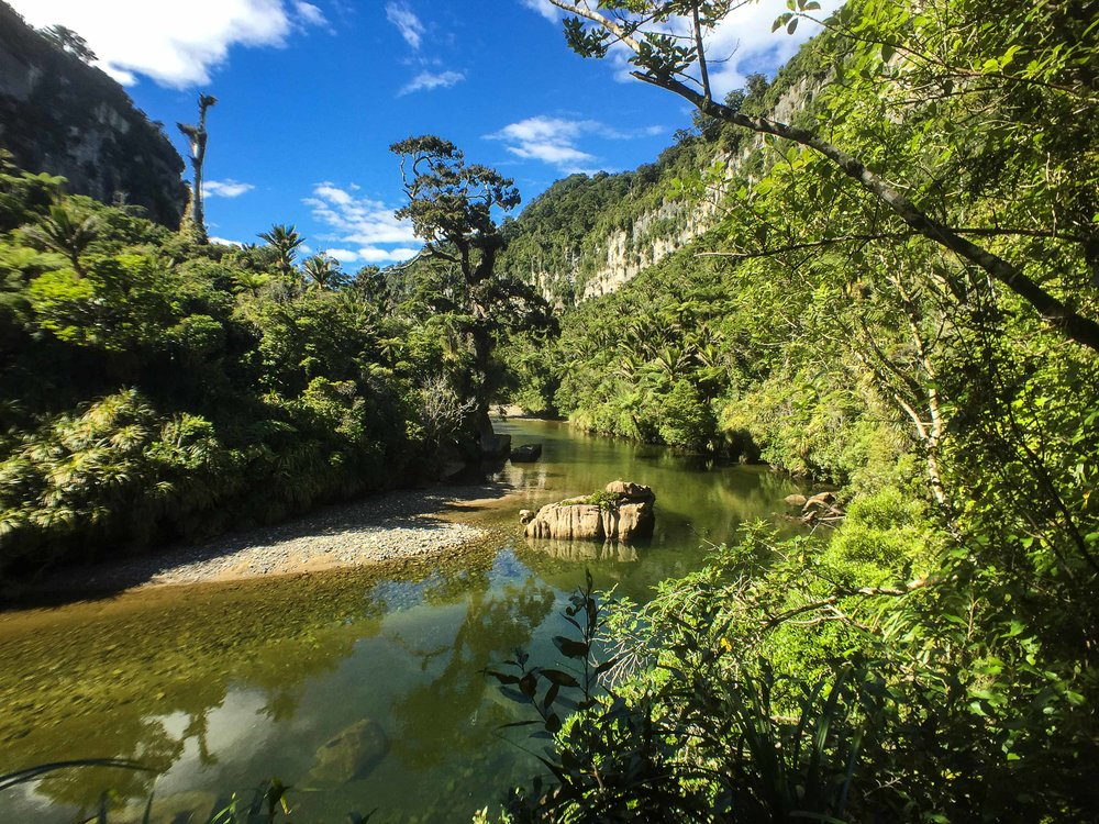 kiwi_paradise.jpg