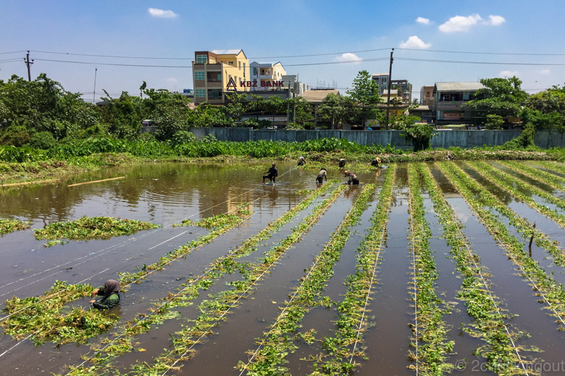 workers_in_watercress_fields_circular_train_yangon_myanmar.jpg.jpg