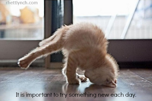kitty yoga important rl.png