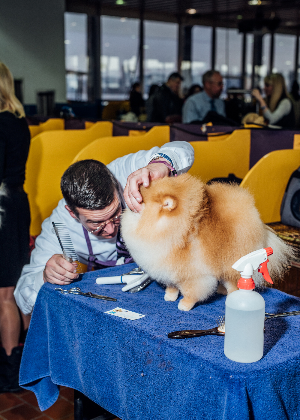 Westminster Dog Show for Instagram