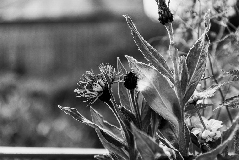 millpondflowerfarm_jotennant022.jpg