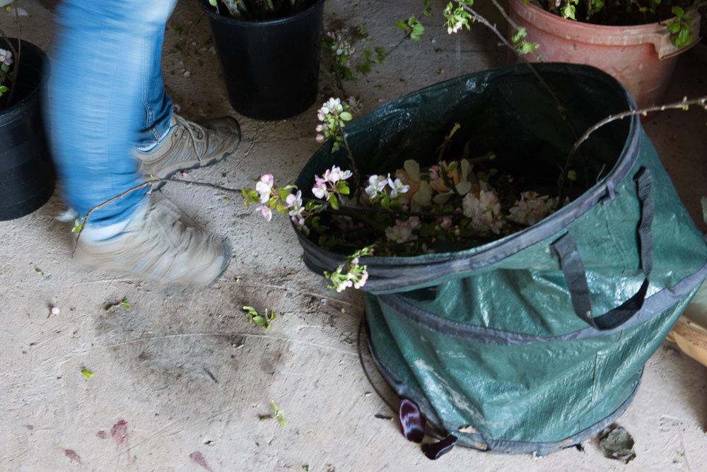 millpondflowerfarm_jotennant026.jpg